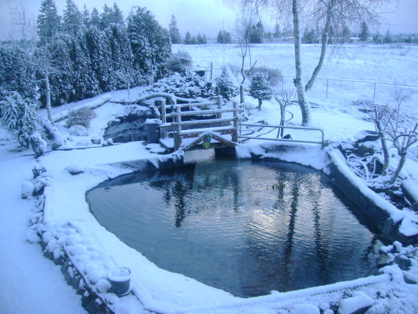 Trout pond DIY -- , Back-yard water garden project had gone wild -- My wife was on vacation and I started building a trout pond in our back-yard ... Was she ever surprised!, First Winter snow slows project. Water gardening can become addicting.      , Yards Design