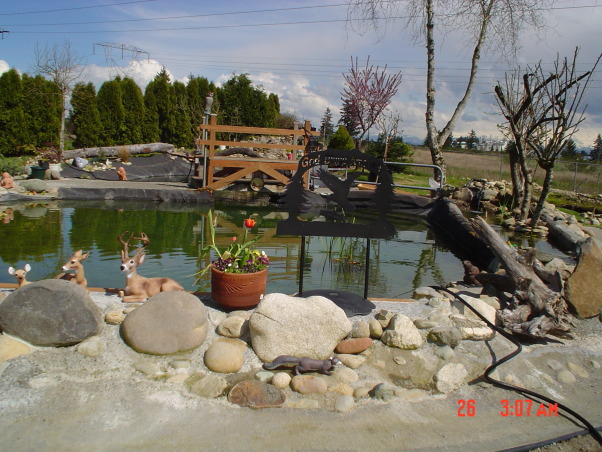 Trout pond DIY -- , Back-yard water garden project had gone wild -- My wife was on vacation and I started building a trout pond in our back-yard ... Was she ever surprised!, Large and small rock from our own property and from the hole we dug become accents ... , Yards Design