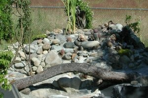 Trout pond DIY -- , Back-yard water garden project had gone wild -- My wife was on vacation and I started building a trout pond in our back-yard ... Was she ever surprised!, Upper Water fall and water feature constuction with log accent over spill-way into deep end of pond.     , Yards Design