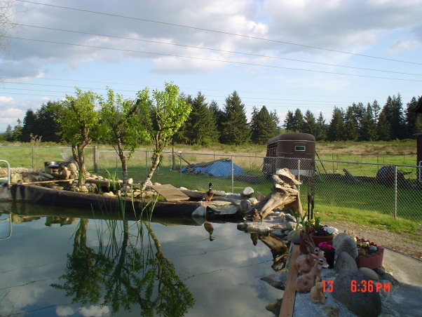 Trout pond DIY -- , Back-yard water garden project had gone wild -- My wife was on vacation and I started building a trout pond in our back-yard ... Was she ever surprised!, Looking to the south east from our backyard deck over pond. Note the Mallard duck sitting on edge.     , Yards Design