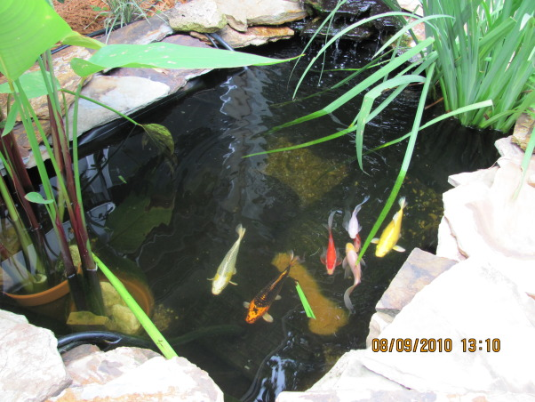 "Recycled Hot Tub!, I Recycled an old Hot Tub into a Great Pond by putting it into the ground! Very easy - really. The (hot tub) seats are used for shelves for the plants & used larger slabs of stone to make ""hiding"" bridges for the fish., the ""hot tub"" is plenty deep for the fish, Yards Design"