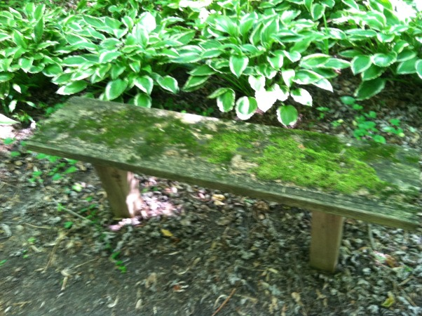 BENCH MARK, Before and after pics of 2 benches I fixed up for the 3 mile trail I take my dog thru. Its part of a res. community and my dog Bear plays with his buddies thru the trails. I made the new benches out of old stairs to reuse the treated wood. , The bench before - I actually love the look of it - very whimsical - but they never get used because of the moss and rot. , Gardens Design
