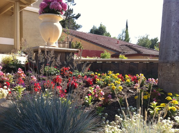 curb appeal, Completely remodel the left and right front yards., Gardens Design