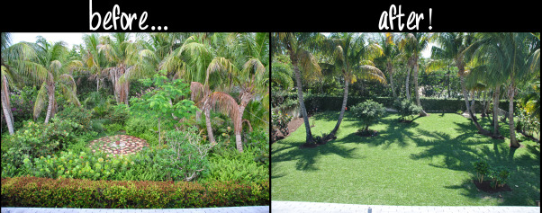 Wild Jungle Renovation, My fiance and I purchased our house in May 2012, the guy we bought it from was obviously obessed with plants.  There was not a blade of grass and only 2 over grown paths.  We kept 11 palm trees, gave away 26 small palm trees, pulled up ferns over 6 feet tall, etc.  Once we removed the jungle we laid sod.  We did this ALL ourselves - just the two of us.  Finished 3/4/13...lots of blood, sweat and tears!, Yards Design