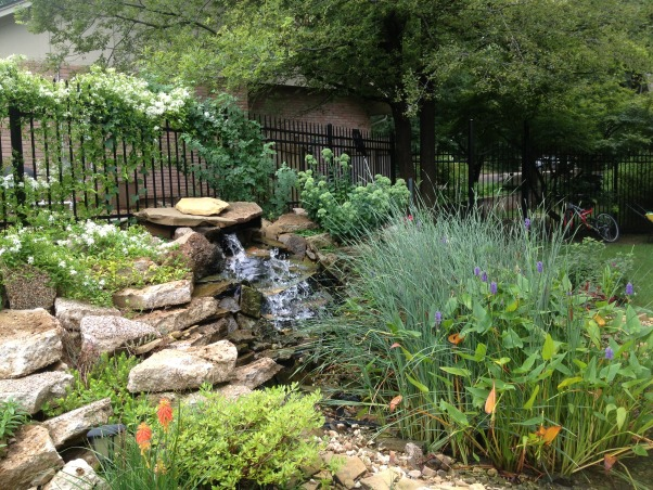My backyard pond, When I had a new patio put in I couldn't bear the thought of sending all that old concrete to the dump, so I reused it to build my pond., The key to hiding the broken up patio concrete is lots of plants, Gardens Design