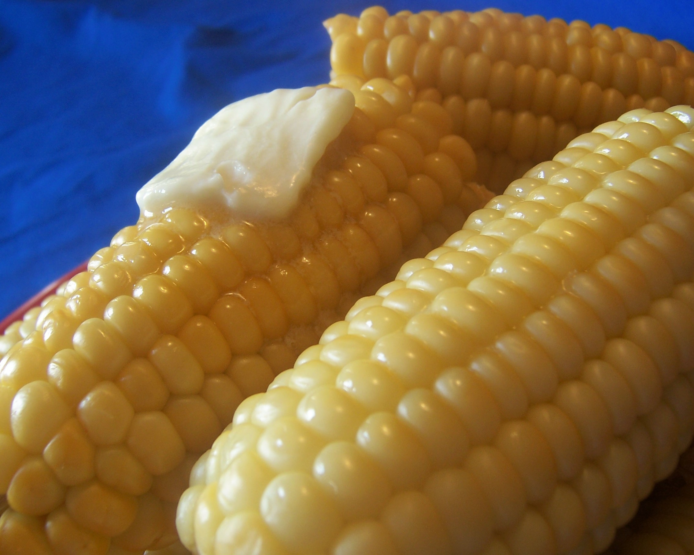 Kittencal's Milk Boiled Corn on the Cob Recipe