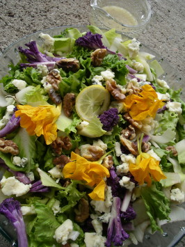 Chicory-Endive Roquefort  and Walnut Salad. Photo by Cookgirl