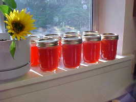 Hot As Hell Habanero Zucchini Jelly. Photo by Chef PotPie