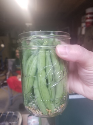 Dilly Beans - Healthy Canning