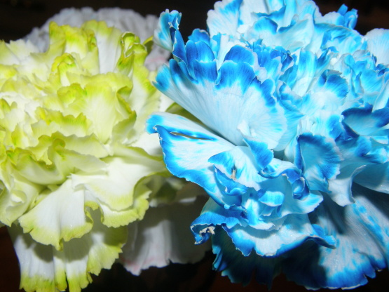 When You See Pom Poms Or Carnations That Are A Baby Royal Blue They Aren T Some Crazy Genetically Created Hybrid These Were Dyed At Point Between