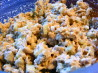 Better-Than-Tuna, Tempeh Salad. Recipe by Kozmic Blues