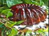 Shiny Kahlua Chocolate Icing