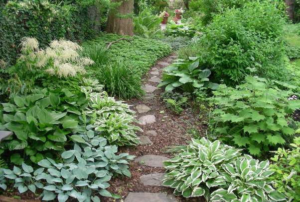 shady serpentine walk, Difficult spaces require creative solutions:  What to do with a very long and narrow yard? A graceful serpentine path of different materials winds through different outdoor rooms in the shade.  This upload starts the show, but other downloads by nwphillygardener continue to show this unique shade garden., The serpentine path starts as stepping stones in bark mulch in a woodland of evergreen ground covers & ephemeral spring bulbs, which starts with some variegated hosta that beckon you to begin your journey., Gardens Design
