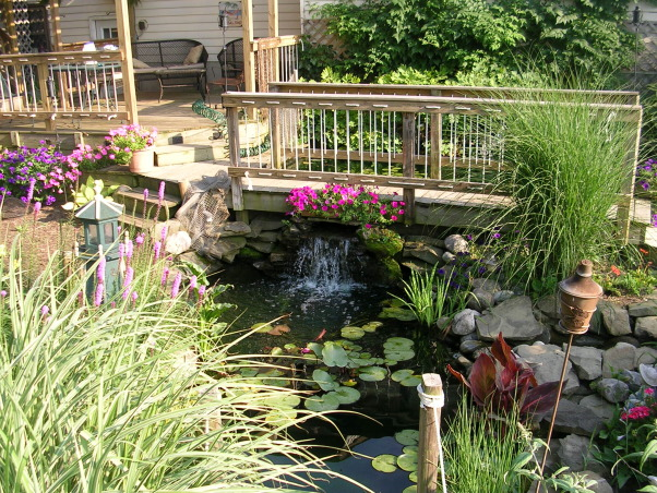 My Garden Pond, I made two garden ponds with a bridge and three waterfalls and a stream between the two ponds. I have over 20 koi and lots of frogs.  I also built a deck with a pergola.  At night the ponds light up with torches and low voltage lights under the waterfalls and around the ponds and my wife and I sit in our swing and listen to the waterfalls and frogs croaking.  I live in Ohio so we can only enjoy it for 8 months out of the year.  In the winter the koi stay at the bottom of the pond.  , Gardens Design
