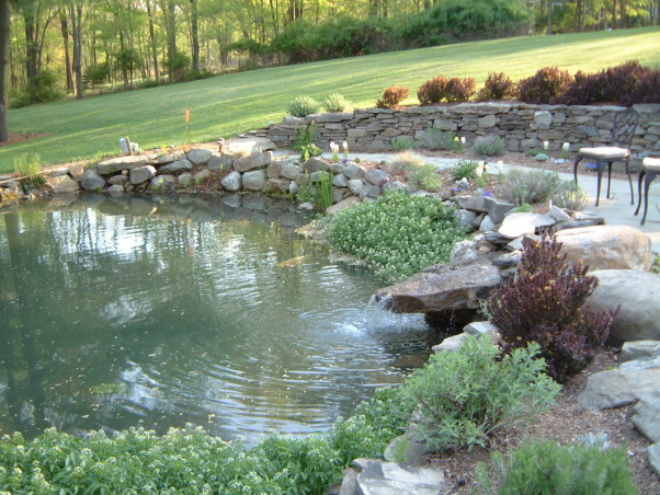 Love my garden, This is my playground!  It has been developing for the past 23 years from a nondescript property., Koi and Goldfish Pond.  This is a natural Spring Fed pond with a clay bottom.  It waterfalls down to our Big Pond which has Bass for fishing.  I have a screen at the waterfall to prevent our pets from going over., Gardens Design