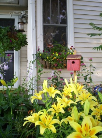 My Small Front Porch , I have a very small from porch with a small flower garden in front., The small flower garden off my front porch, early summer blooms.       , Porches Design