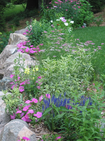 Pleasant view gardens, Waterfalls and ponds amongst the perennial gardens, backyard border.  Veronica-royal candles, Variegated obedient plant, pink yarrow.                           , Gardens Design