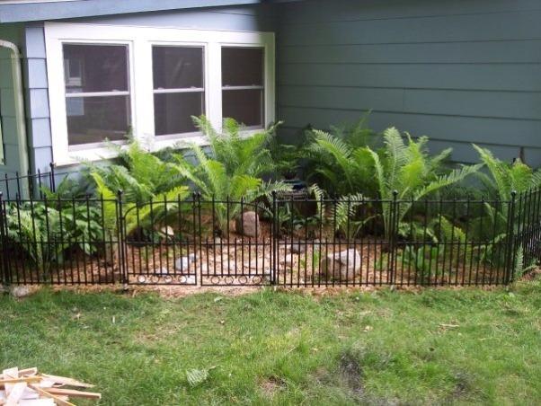 Dog Proof Backyard Ideas : DogProof Fern Garden and Fountain, My fern garden in my backyard