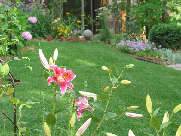 Pleasant view gardens, Waterfalls and ponds amongst the perennial gardens, Stargazer lilies in backyard garden against house                      , Gardens Design