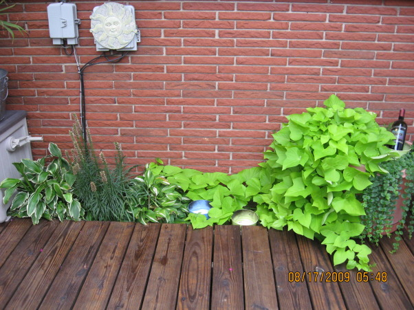 I LOVE FLOWERS!, A basement window cover I am trying to hide with sweet potato vine , Gardens Design