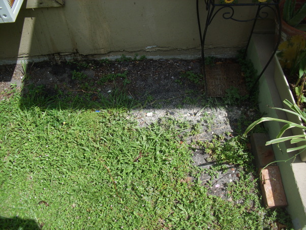 duplex porch in need of help, I just moved into my new duplex that i totally think needs to be redone. But theres one problem its not my building and its on the walkway towards the back of the house which is to the second house to the duplex., how wide the grass is from the wall to the sidewalk. water drips down to the ground from roof when it rains. Mind you i live in florida, its almost everyday., Porches Design
