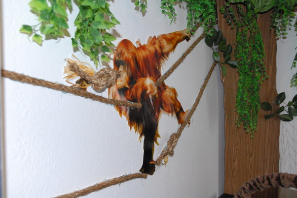 It's a Jungle in Here!, The goal in designing my son's room was that it be colorful, full of texture & three-dimensional.  Each scene is made up of at least three layers of media.  I tried to carry the jungle theme throughout the nursery by having branches continue through the verticle blinds & appear on the next wall. The trees were made out of foam board. Then we added contact paper, jungle themed paper & various layers of greenery. The animal photos were taken at various zoos & blown up to poster size (20 x 30). We cut them out & glued them to poster board then adhered them to the wall with liquid nails.  We used various shades of grasses & cattails over a green hill for the baby zebra scene.  The cheetah's rock was painted with Ralph Lauren River Rock paint to add a rough texture & completed the scene with tall grass.  Finally, the orangutan & giraffe have manilla rope & netting to give them an extra layer.  These will be removed once our baby boy is old enough to cause any havoc! ; )  It was a huge project that my niece, nephew & I worked on during my maternity leave. One pleasant surprise in the design was the movement in the greenery when the ceiling fan is on. The gentle rustling of the leaves & grass add a nice touch that really makes the room come alive. The nursery turned out just as I had hoped & I'm thrilled every time my newborn son curiously stares around at the jungle in his room! , This is a poster size print of an orangutan swinging through the tree.  Again, plants frame the image.  Manilla rope is adhered onto the print where the actual rope was in the photo. It really makes the image pop!         , Nurseries Design
