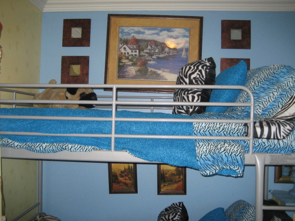 zebra rooms, zebra print rooms, zebra print and blue boys' bedroom, Bedrooms Design