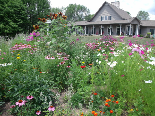 colorful,old fashioned,cottage garden, our home and front cottage garden.Old fashioned varities of flowers.Zinnias,cosmos,marigolds,daisies,etc. , Gardens Design