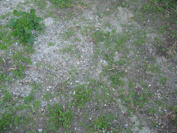 Ugly Backyard Needs Help, We bought our home 3 months ago and we have a backyard that is ~2000 sqft. but its empty, dirt everywhere with tons of weeds growing all over the place.  We need some ideas.  We want a nice space for our 3 young children and our German Shepard.  Budget is very tight with about $500 right now and about $100 a month to invest.  Current plan is to till the ground, grade for runoff and seed grass. We're able to put in the time and effort necessary to get this done, but we're both completely unexperienced and have no imagination., The ground is mixed with hard dirt and weeds              , Yards Design