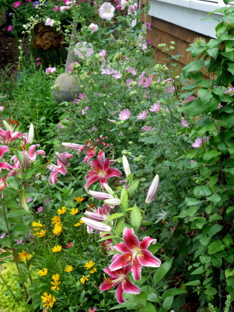 Pleasant view gardens, Waterfalls and ponds amongst the perennial gardens, stargazer lily, coreopsis and rose mallow          , Gardens Design
