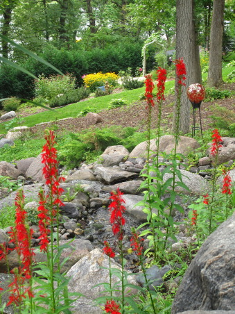 Pleasant view gardens, Waterfalls and ponds amongst the perennial gardens, Cardinal flower            , Gardens Design