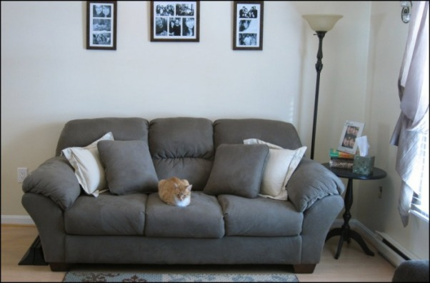 Teeny-Tiny Living Room, Daylight (and the cat)  , Living Rooms Design