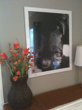 orange and gray guest bedroom, We are redecorating our master bedroom which means all the old decor is finding a new home in our guest bedroom. I made the art over the bed and had a 20x30 print made of our dog for over the dresser in black and white. , Bedrooms Design