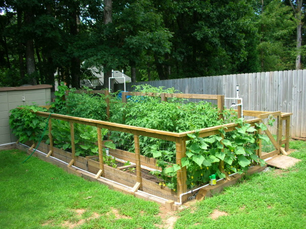 Information about rate my space questions for for Raised vegetable garden bed designs