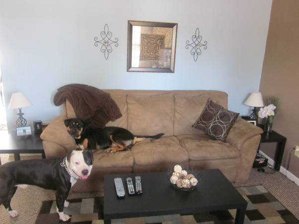 the brown& blue themed living room/dinning room, excuse my dogs, they love being center of attention  , Living Rooms Design