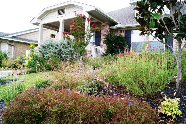 Colorful Texas Front Yard, My husband and I created several large flower beds to compliment our small sloped front yard.  We used all native Texas drought and heat tolerant plants--most of which are green all year round.  , Landscaping