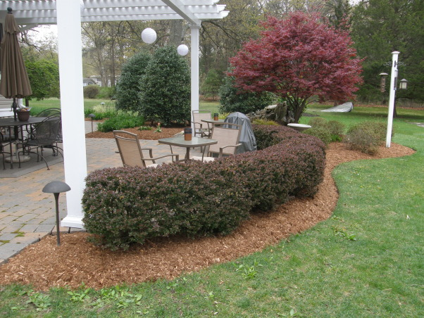 Mulch, mulch and more mulch!!!, Back yard patio., Barberry hedges...almost the way we like them after 7 years., Yards Design