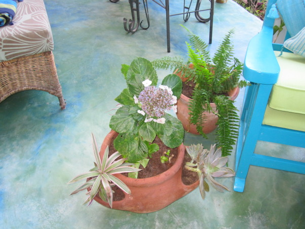 Patio in the Caribbean, Eclectic patio, with different finds that have been repainted.  Color theme is blues and greens.The flooring is colored concrete  using cement pigments. The pergola is covered with clear zinc to allow the light in, which at night time is lighted with solar power lights. There are green outdoor curtains.  A place to just relax., Plants , Patios & Decks Design