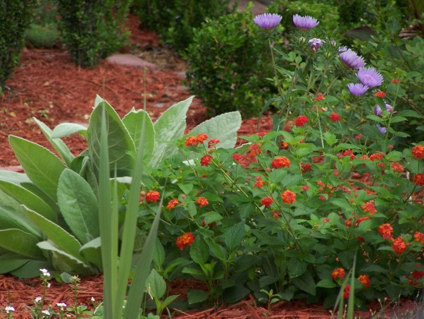 My back yard in Florida, Gardens Design