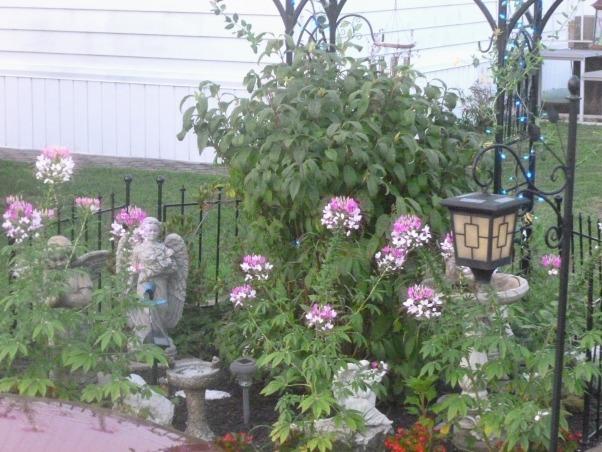 My summer gardens, My summer joy , The Angle Garden is in  full bloom, Gardens Design