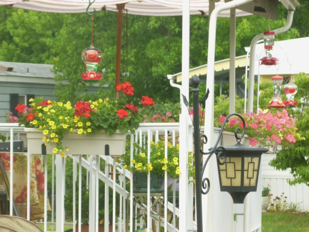 My summer gardens, My summer joy , These flowers were my 3rd choice on our new deck. It was a struggle finding plants that were happy being up off the ground plus we have a wind tunnel., Gardens Design