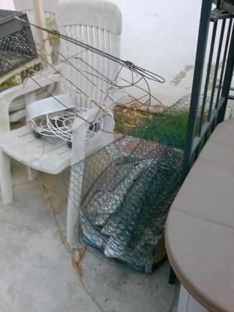 Back Yard, Backyard HELP, Backyard.........Help!, Yards Design