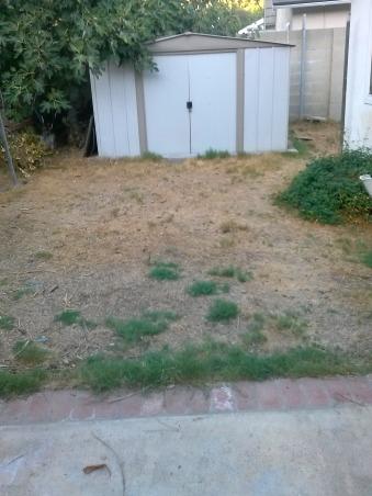 Back Yard, Backyard HELP, Our back yard.....grass.....hummmm NO, Yards Design
