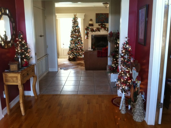 Christmas House, My house has several Christmas trees in all rooms dressed up in different themes. Some rooms have two or three trees.  It's so much fun decorating this house for Christmas., A few of the family tree from the front door.  , Holidays Design