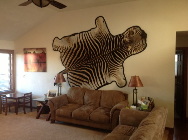Need help please!, I need help decorating around this zebra. It's a real zebra rug but can not go on the floor. The picture next to it I bought at a gallery and is printed on steel. I wanted something to slightly off set the zebra. I'm thinking of painting a neutral taupe color with one accent wall. Possibly a chocolate brown and bringing color with an accent color throughout decorations but what color? i could move the steel picture to my bedroom.I could also move the zebra if I can't find a way to incorporate it in better. I have two kids so it has to be kid friendly as well. Thank you for your help!, Living Rooms Design