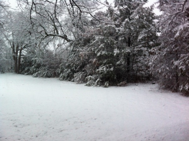 Winter Wonderland, This is a picture of our backyard before., Yards Design