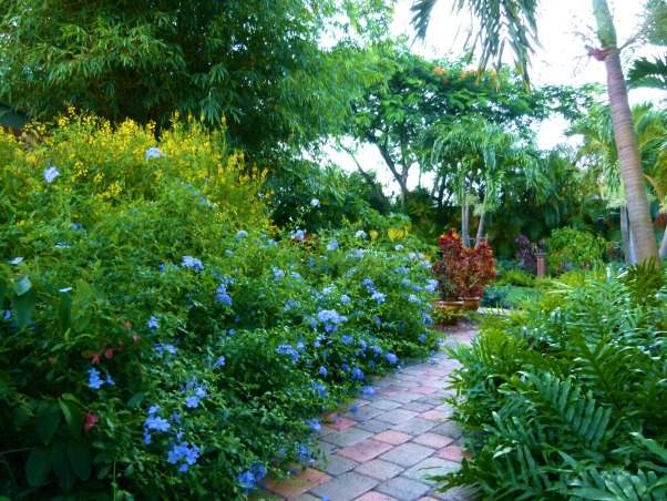 Private Paradise: Color all year long!, We've worked on our garden for the past 12 years. It includes many tropical and flowering plants, trees and fun decor., We have color all year round with Thryllis, Plumbago and Angelwing Begonias., Gardens Design