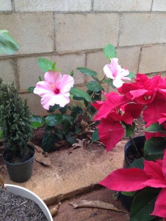 Mini Roses and Deck, Patios & Decks Design