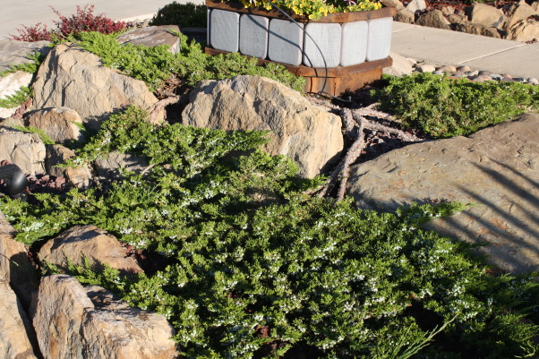 landscape works, photos of projects I have created with rock, metal, wood, and plantings, juniper/rocks, Bliss yard, Gardens Design