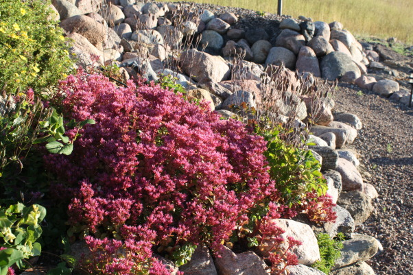 landscape works, photos of projects I have created with rock, metal, wood, and plantings, Sedum, Bliss yard, Gardens Design